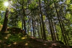Waldstück am Klingenpfad - Solingen