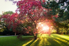 Sonnenuntergang im japanischen Garten - Leverkusen