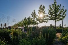 Neulandpark Impression III - Leverkusen