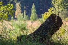 Ohligser Heide Baumstamm - Solingen