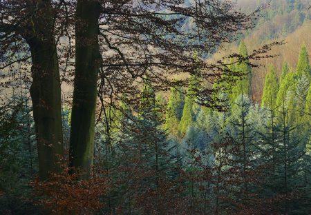 Arboretum Burgholz im Herbst