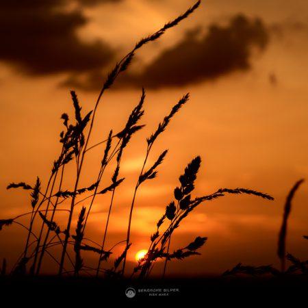 Sommerlicher Sonnenuntergang