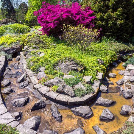 Botanischer Garten - Bachlauf