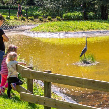 Botanischer Garten - Fischreiher