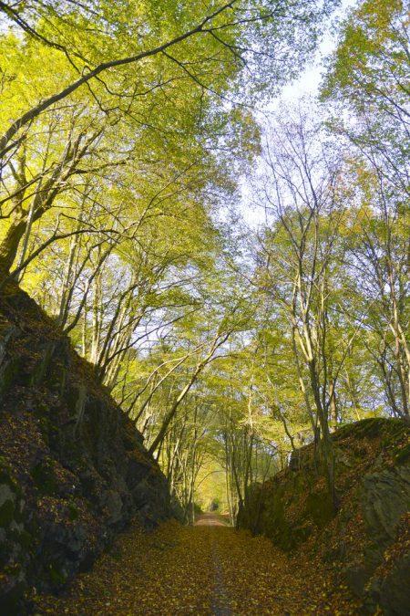 Bergbahntrasse Müngsten