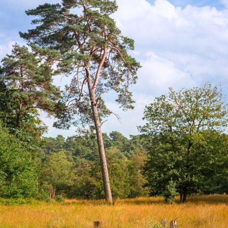 Ohligser Heide Baum