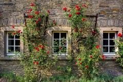 Rosenfenster an Schloss Heiligenhoven - Lindlar