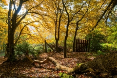 Herbstwald Untenrüden - Solingen