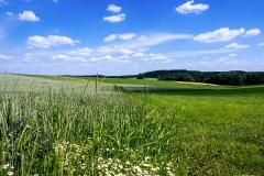 Sommerfeld in Waldbröl