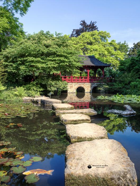 Japanischer Garten - Fischteich
