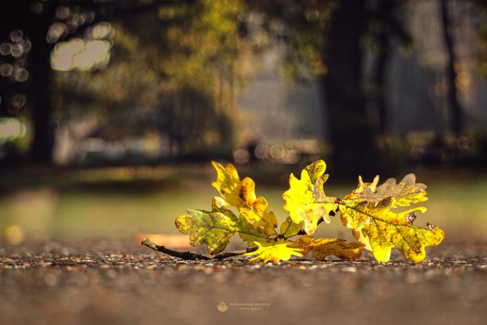 Herbstast