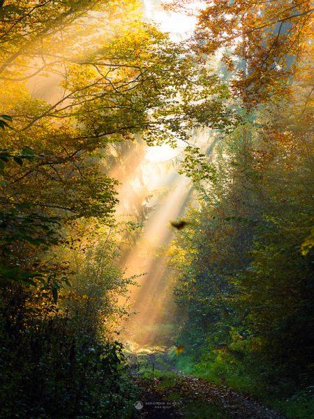 Herbstliche Sonnenstrahlen