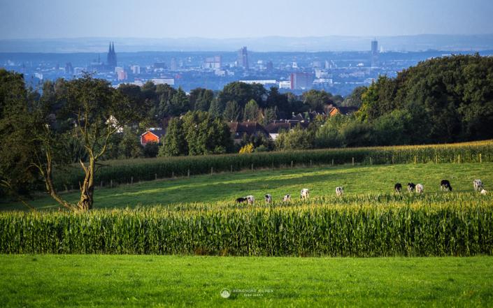 Blick von Eichen nach Köln