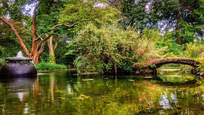 Japanischer Garten - Teich mit Brücke