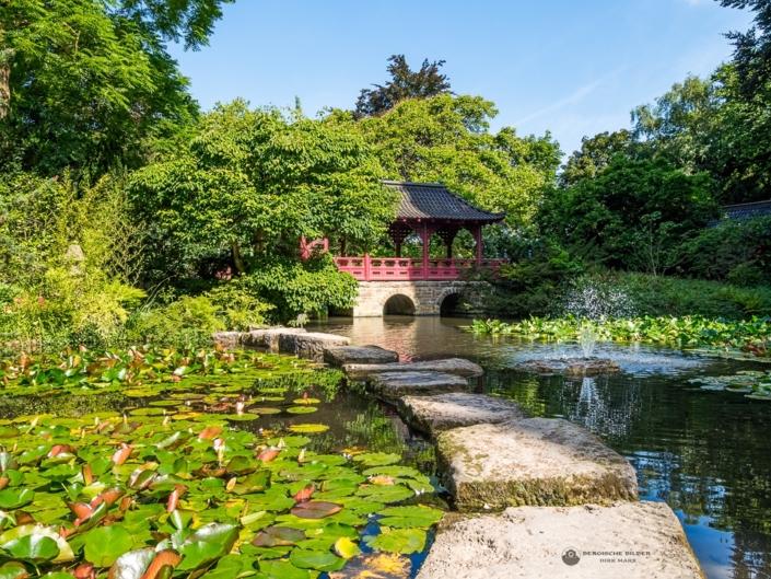 Japanischer Garten - Fischteich Sommer