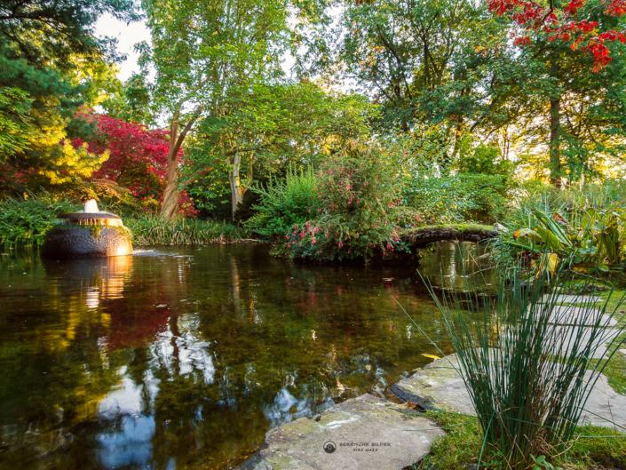 Japanischer Garten - Teich