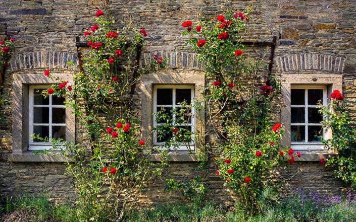 Schloss Heiligenhoven Rosenfenster