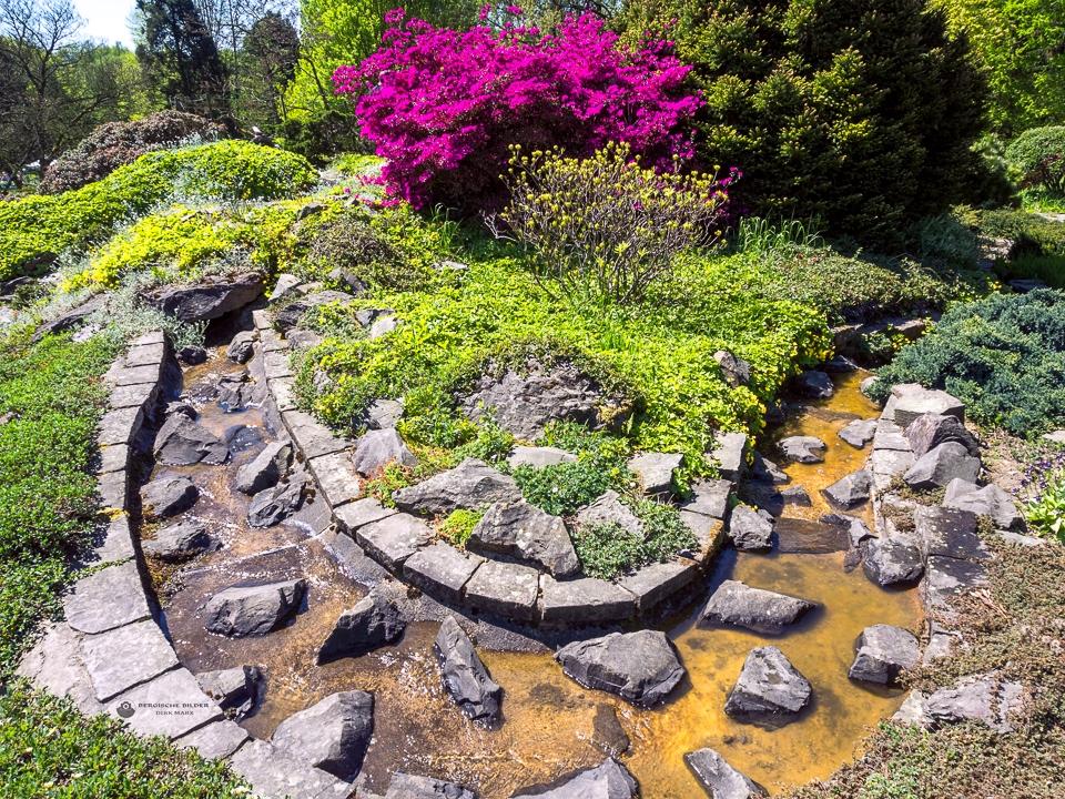Botanischer Garten Bachlauf Bergische Bilder Dirk Marx
