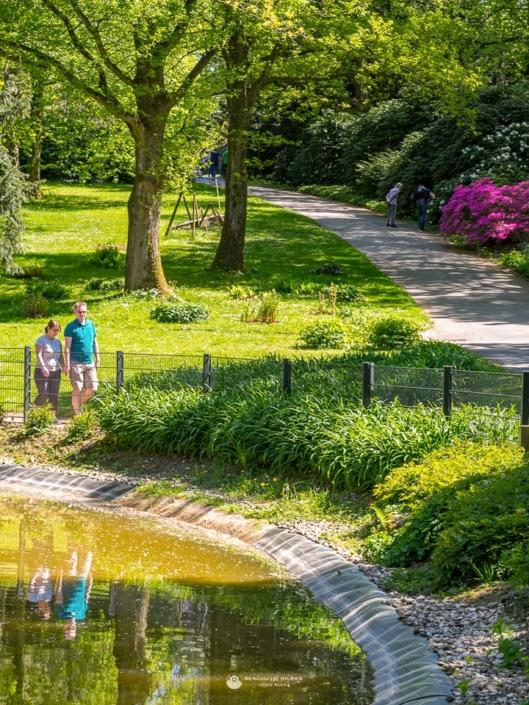 Botanischer Garten - Teich