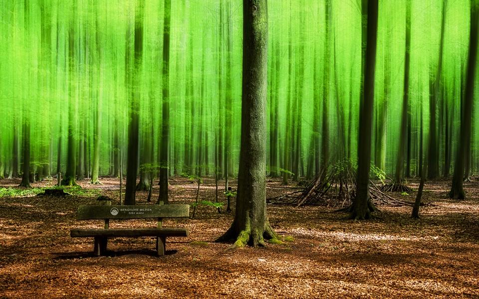 Waldbank Unschärfe