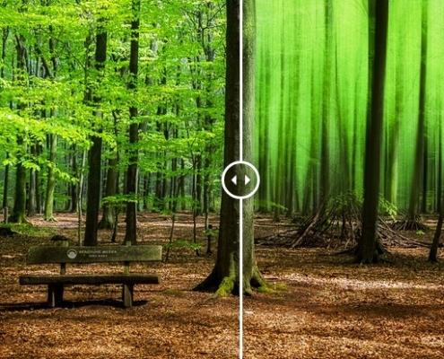 Waldbank Vergleich