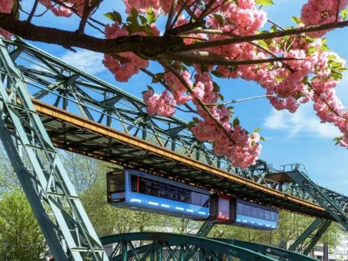 Schwebebahn GTW14 zur Kirschblüte